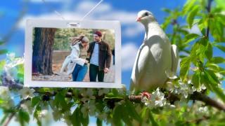 قالب اسلایدشو کبوترهای سفید